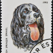 A stamp printed in Tanzania shows English Springer Spaniel - Foto Stock