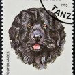 A stamp printed in Tanzania shows Newfoundlander - Foto Stock