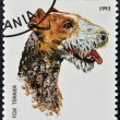 A stamp printed in Tanzania shows Wire Fox Terrier - Foto Stock