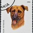 A stamp printed in Tanzania shows Labrador Retriever - Foto Stock