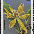 A stamp printed in Tanzania dedicated to tropical flowers, shows encyclia pentotis - Foto Stock