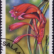 A stamp printed in Tanzania dedicated to tropical flowers, shows cyrtanthus minimiflorus - Foto Stock