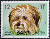 A stamp printed in Oman shows a Bichon Maltese dog breed — Stock Photo