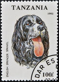 A stamp printed in Tanzania shows English Springer Spaniel — Stock fotografie