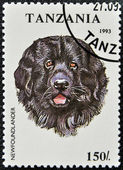A stamp printed in Tanzania shows Newfoundlander — Stock Photo