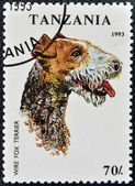 A stamp printed in Tanzania shows Wire Fox Terrier — Stock fotografie