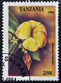 A stamp printed in Tanzania dedicated to tropical flowers, shows allamanda cathartica — Stock Photo