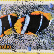 Stock Photo: Stamp printed in Australidedicated to fishes of reef shows orangefin anemonefish