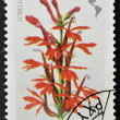 Stamp printed in Hungary shows flower, lobella cardinalis — Stock Photo