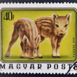 A stamp printed in Hungary shows two young wild boars - Stock Photo