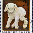 A stamp printed in Hungary shows image of a sheep, ovis aries — Stock Photo