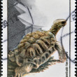 Stock Photo: Stamp printed in Romanishows tortoise