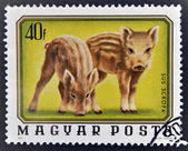 A stamp printed in Hungary shows two young wild boars — Stock Photo