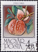 Un sello impreso en hungría muestra melocotón — Foto de Stock