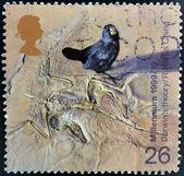 Známka vytištěna ve Velké Británii ukazuje Galapágy finch a fossilzed kostra (Darwinova teorie evoluce) — Stock fotografie
