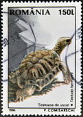 A stamp printed in Romania shows a tortoise — Stock Photo