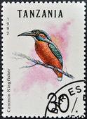 Un sello impreso en tanzania muestra alcedo atthis — Foto de Stock