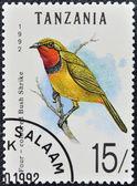 A stamp printed in Tanzania shows four - coloured bush shrike — 图库照片