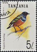 A stamp printed in Tanzania shows superb starling — Stock Photo