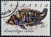 Un sello impreso en tanzania muestra lamprologus calvus — Foto de Stock