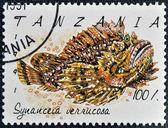 Znaczek wydrukowany w tanzanii pokazuje synanceia verrucosa — Zdjęcie stockowe