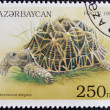 AZERBAIJAN - CIRCA 1995: A stamp printed in Azerbaijan shows a Turtle, Geochelone elegans, circa 1995. - Stock Photo