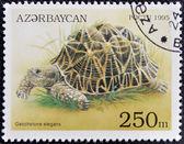 AZERBAIJAN - CIRCA 1995: A stamp printed in Azerbaijan shows a Turtle, Geochelone elegans, circa 1995. — Stock Photo