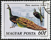 HUNGARY - CIRCA 1977: A stamp printed in Hungary shows a green Peacock, circa 1977. — Stock Photo