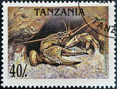 A stamp printed in Tanzania shows a prawn — Stock Photo