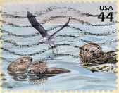 A stamp printed in USA shows two otters eating a hedgehog and a seabird — Stock Photo