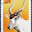 GERMANY-CIRCA 1970: A post stamp printed in Germany shows antelope, circa 1970 - ストック写真