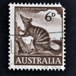 AUSTRALIA - CIRCA 1960: A stamp printed in Australia shows numbat, Banded Anteater, circa 1960 — Foto Stock