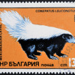 BULGARIA - CIRCA 1985: A stamp printed in Bulgaria shows American Hog-nosed skunk, conepatus leuconotus, circa 1985 — Stock Photo