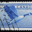 CANADA - CIRCA 1952: A stamp printed in Canada shows duck, circa 1952 — Stock Photo
