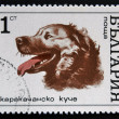 BULGARIA - CIRCA 1970: A stamp printed in Bulgaria shows face a dog, circa 1970 - ストック写真