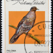 CUBA - CIRCA 1979: A stamp printed in Cuba dedicated to feral pigeons will, shows Plain Pigeon (Columba inornata), circa 1979 - ストック写真