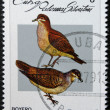 CUBA - CIRCA 1979: A stamp printed in Cuba dedicated to feral pigeons will shows Ruddy Quail-Dove (Geotrygon montana), circa 1979 — Stock Photo #17659001