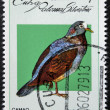 CUBA - CIRCA 1979: A stamp printed in Cuba dedicated to feral pigeons will shows Quail-dove (Geotrygon caniceps),  circa 1979 - ストック写真