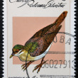 CUBA - CIRCA 1979: A stamp printed in Cuba dedicated to feral pigeons will shows Key West Quail-Dove (Geotrygon chysia), circa 1979 - ストック写真