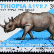 ETHIOPIA - CIRCA 2005: A stamp printed in Ethiopia shows Black Rhinoceros, diceros bicornis, circa 2005 - ストック写真