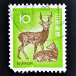 Stock Photo: JAPAN - CIRC1970: stamp printed in Japshows male dear and female dear, circ1970