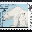 POLAND - CIRCA 1978: stamp printed in Poland shows polar bears, circa 1978. - ストック写真