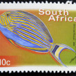 SOUTH AFRICA - CIRCA 2000: A stamp printed in RSA shows bluebanded surgeon, Acanthurus lineatus, circa 2000 - Stock Photo