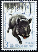 BELGIUM - CIRCA 1974: a stamp printed in the Belgium shows Wild Boar, Regimental Emblem, circa 1974 — Stock Photo