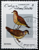 CUBA - CIRCA 1979: A stamp printed in Cuba dedicated to feral pigeons will shows Ruddy Quail-Dove (Geotrygon montana), circa 1979 — Foto de Stock