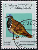 CUBA - CIRCA 1979: A stamp printed in Cuba dedicated to feral pigeons will shows Quail-dove (Geotrygon caniceps), circa 1979 — Stock Photo