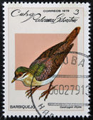 CUBA - CIRCA 1979: A stamp printed in Cuba dedicated to feral pigeons will shows Key West Quail-Dove (Geotrygon chysia), circa 1979 — Stock Photo