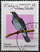 CUBA - CIRCA 1979: A stamp printed in Cuba dedicated to feral pigeons will shows White-crowned Pigeon (Columba leucocephala), circa 1979 — Stock Photo