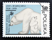 POLAND - CIRCA 1978: stamp printed in Poland shows polar bears, circa 1978. — Foto de Stock