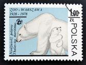 Польша - около 1978: марку, напечатанную в Польше показывает полярных медведей, около 1978. — Стоковое фото